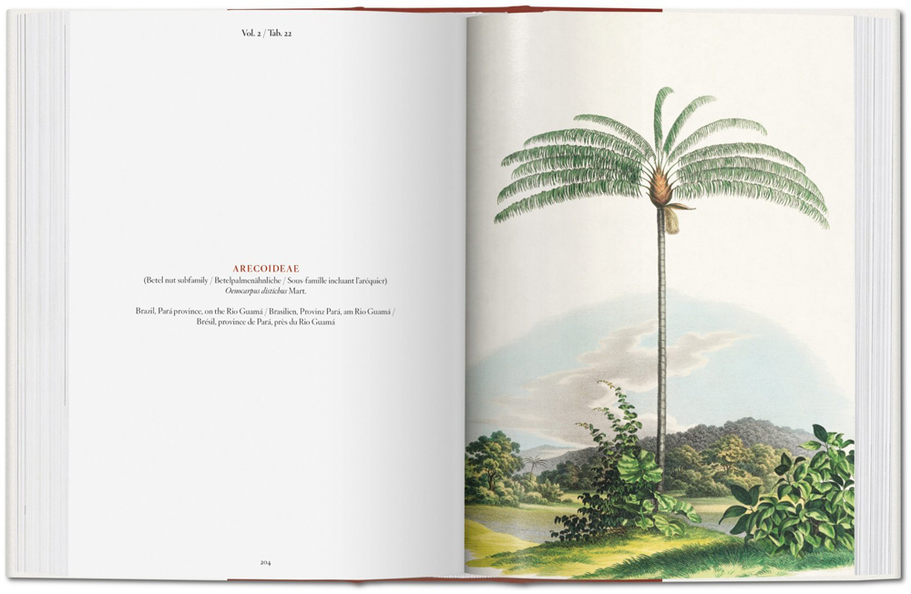 Buch, The Book of Palms - Bild 3