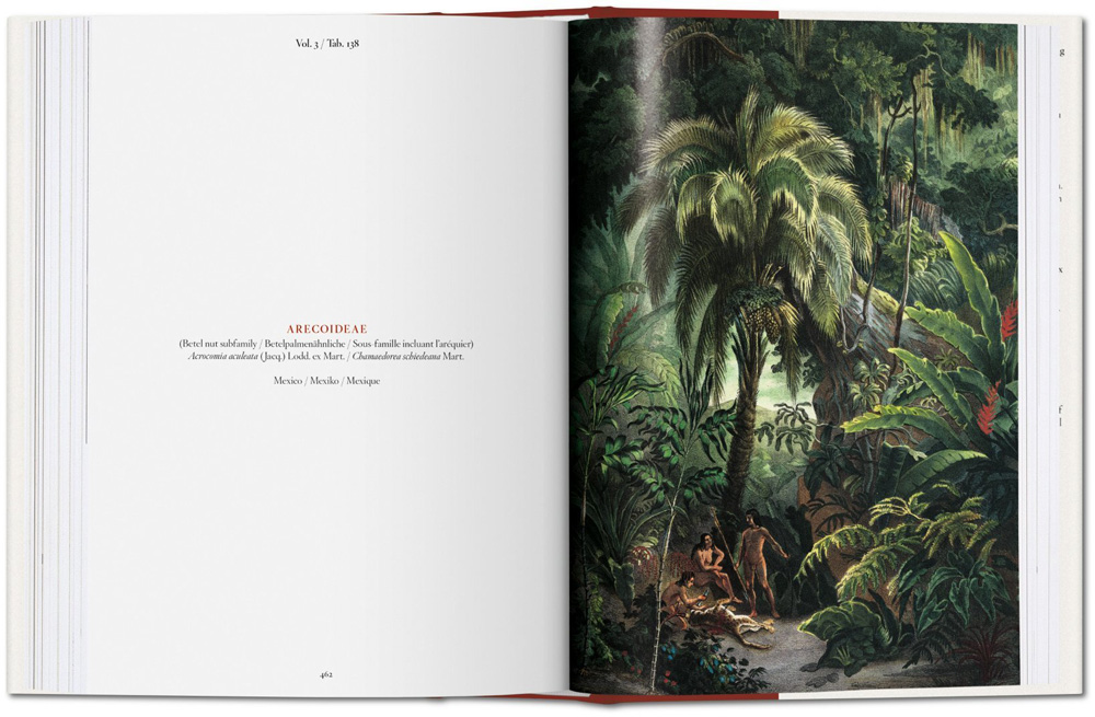 Buch, The Book of Palms - Bild 4