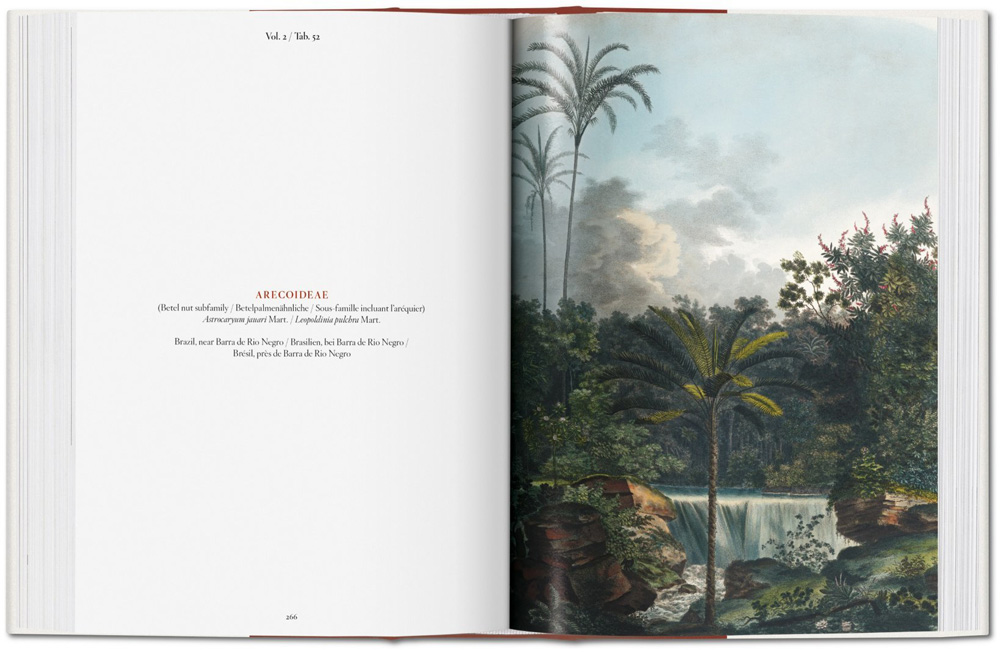 Buch, The Book of Palms - Bild 5